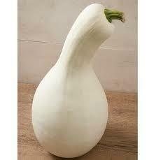 7168 Cushaw White (squash) $12.00