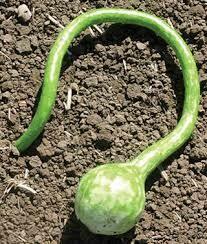 7189 Xtra Long Dipper (gourd) $9.99