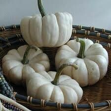 7200 Baby Boo (gourd) $1.49