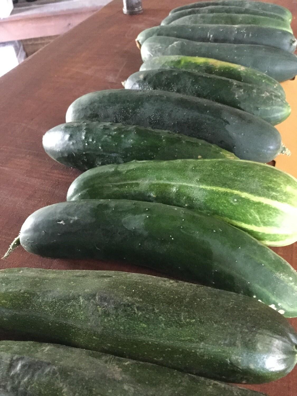 Cucumber $0.75 (produce)