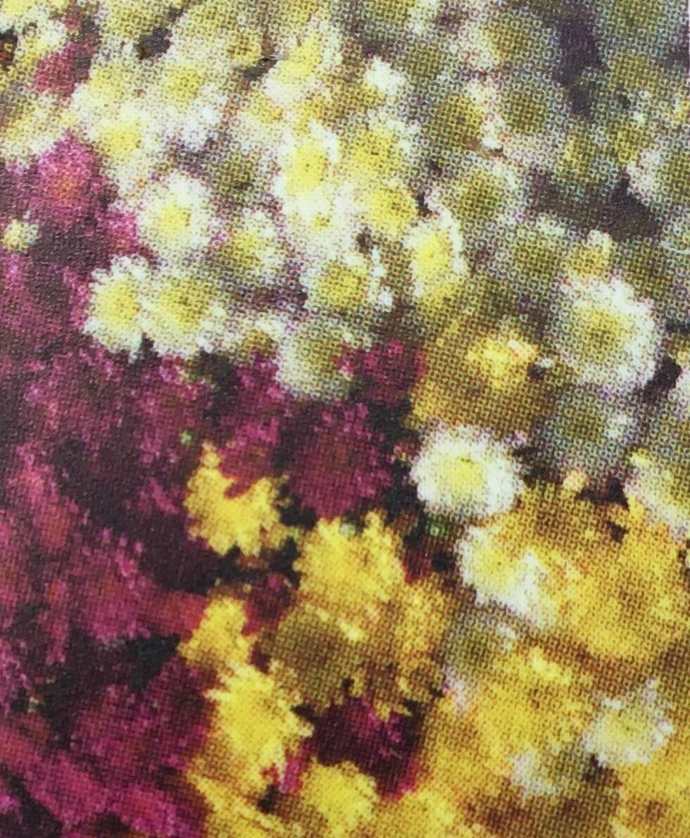 "Mumbo Solstice  (12"" pot) $24.99"