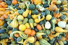 Gourds $0.79
