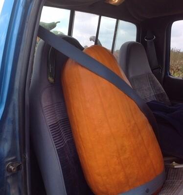 7000 Passenger (pumpkin) $25.00