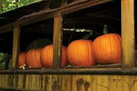7140 Bus Stop (Pumpkin) $5.00