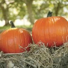 7005 Magic Wand (Pumpkin) $7.00