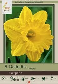 Daffodils Trumpet Exception (8 bulbs)