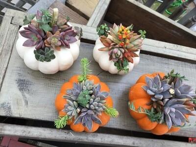 White Pumpkin Succulent Creation