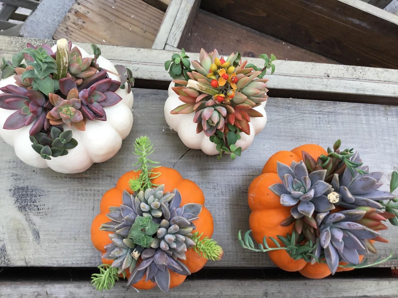 Orange Pumpkin Succulent Creation