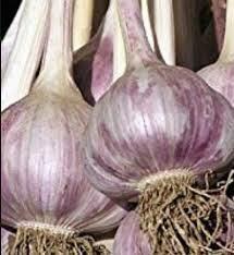 Garlic Inchelium Red (3 bulbs)