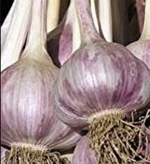 Garlic Inchelium Red (3 bulbs)