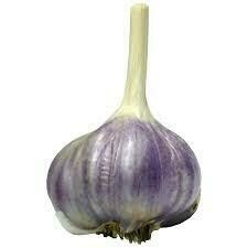Garlic Purple Glazer (3 bulbs)