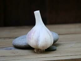 Garlic Duganski (3 bulbs)