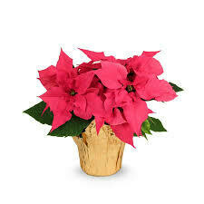 "Poinsettia Pink (Small 4"") $4.99"