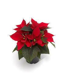 "Poinsettia Red (Small 4"") $4.99"