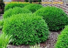 Boxwood Green Velvet (1 gallon) $24.99