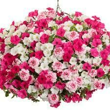 "In Our Element (12"" Hanging Basket) $49.99"