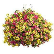 """Candy Store (12"""" Hanging Basket) $49.99"""