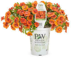 PW Million Bells Double Orange (quart pot)