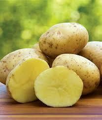 Seed Potatoes Yukon Gold (approx 5lb bag)