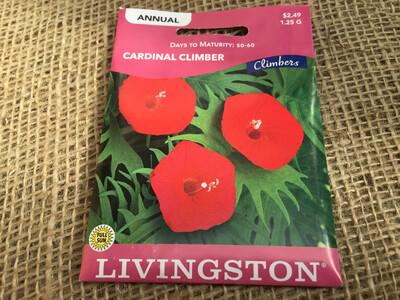 Climber Cardinal (Seed)