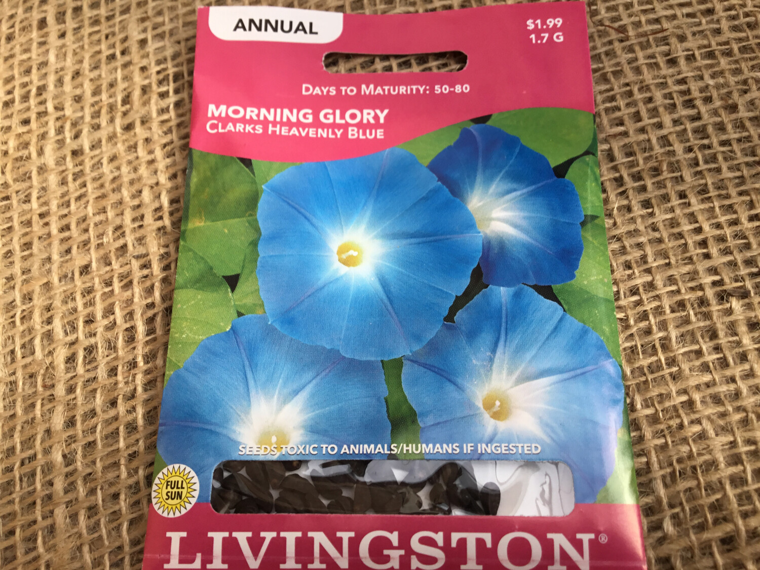 Climber Morning Glory Clarks Heavenly Blue (Seed) $1.99