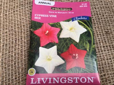 Climber Cypress Vine Mix (Seed)