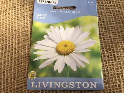 Daisy SHASTA (Seed) $1.99
