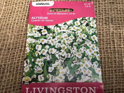 Alyssum Carpet of Snow (Seed)
