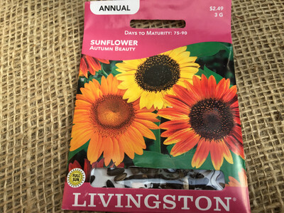 Sunflower Autumn Beauty (Seed)