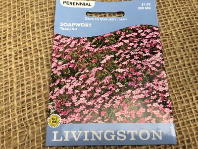 Soapwort Trailing (Seed) $1.99