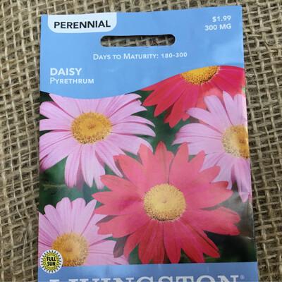 Daisy PYRETHRUM (Seed) $1.99