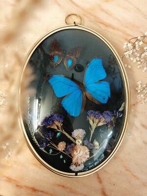 Vlinder decoraties