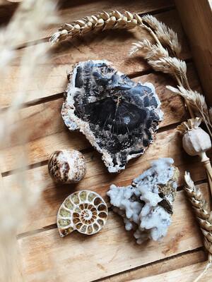 Kristalset versteend hout, koraalsteen, ammoniet en aragoniet