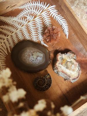 Kristalset versteend hout, agaat, ammoniet en aragoniet