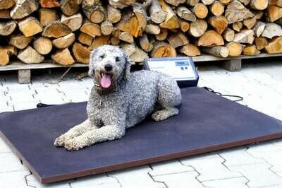 Wärmeplatte für Hundezwinger mit digitaler Steuerung & gradgenauer Einstellung