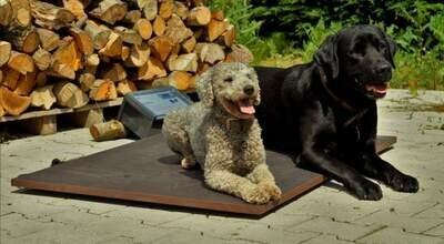 """Wärmeplatte """"Plus"""" für unsere Hundehütten mit gradgenauer Steuerung"""