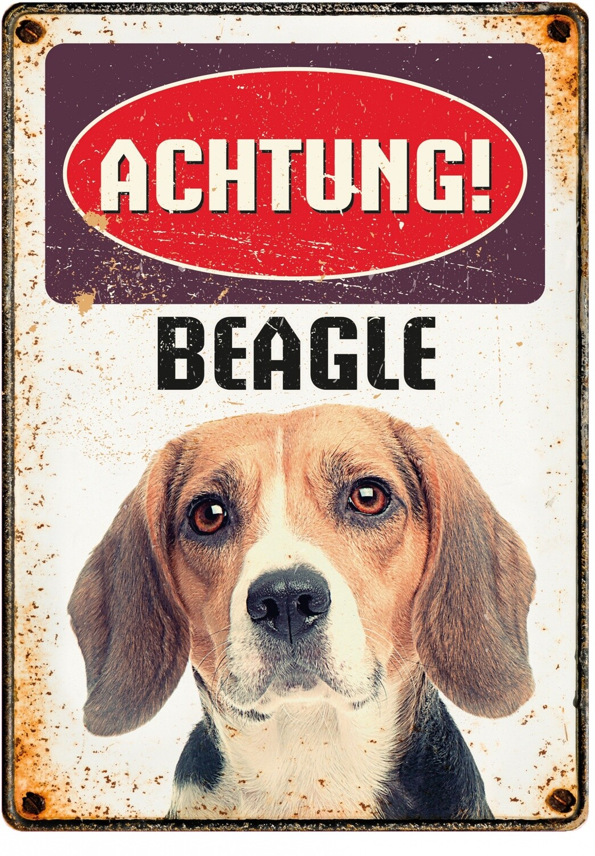Plenty Gifts Hunde- Warnschild Beagle 21 x 14,8 cm