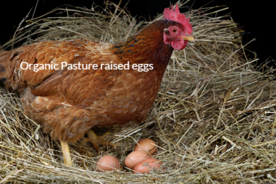 Pastured raised Eggs Dozen