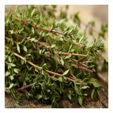 Thyme Red Essential Oil 1/2 oz.