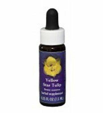Yellow Star Tulip Flower Essence