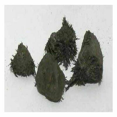 Lodestone Food (iron filings) 1 oz.