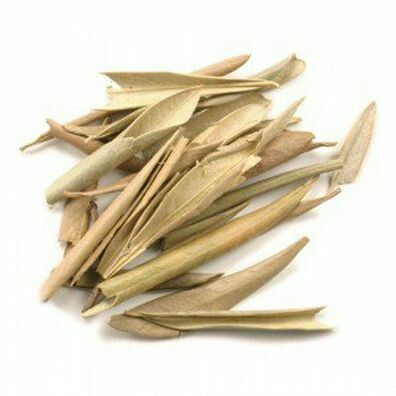Olive leaf 2714