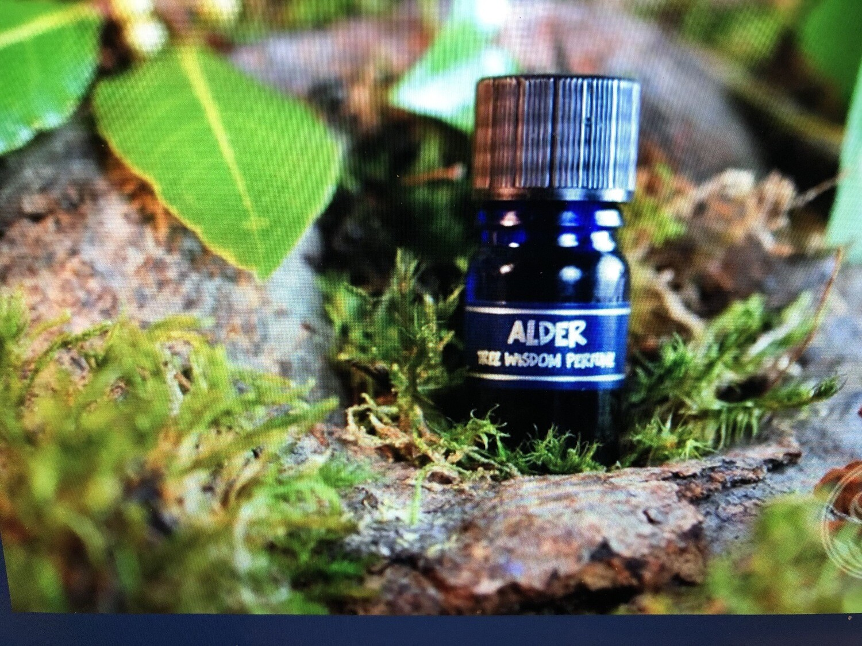 Alder Tree Perfume