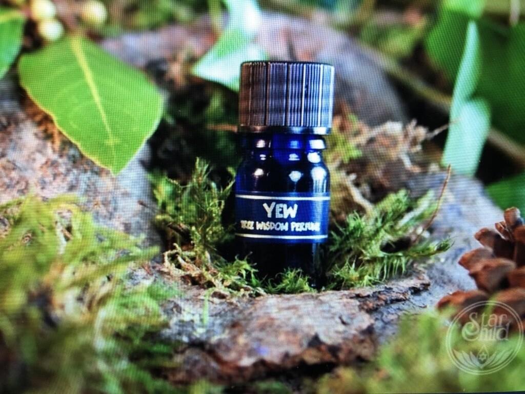 Yew Tree Perfume