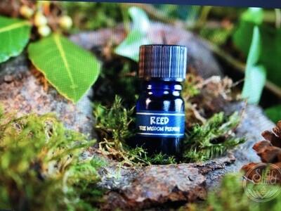 Reed Tree Perfume
