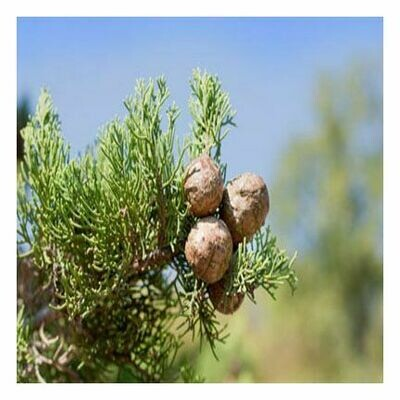 Cypress, 1/2 oz.