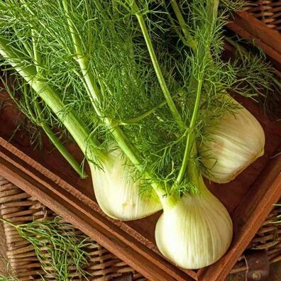 Fennel 1 oz.