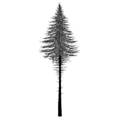 Stamp Fairy Fir Tree 2