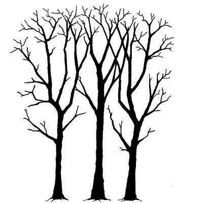 Stamp Spring Trees