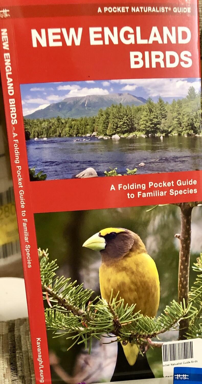 Pocket Naturalist Guide Birds